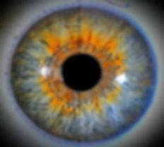 carte%20iridologie%20oeil_edited.jpg