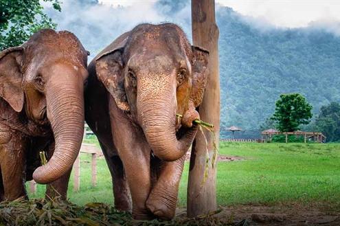 THE ONES WHO IS HAPPY TO LOSE THEIR JOB ON CORONAVIRUS DAYS: ELEPHANTS
