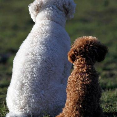 Lucy & Oscar