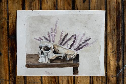 Skull Vase Study