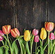 beautiful-tulips-on-wood-royalty-free-im