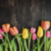 beautiful-tulips-on-wood-royalty-free-im