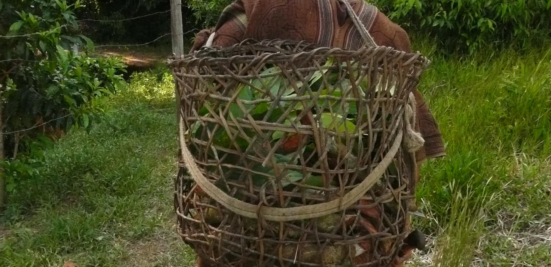 Cueillette de plantes en jungle