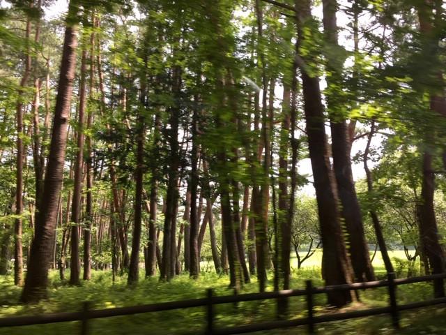 奥宮までの森林