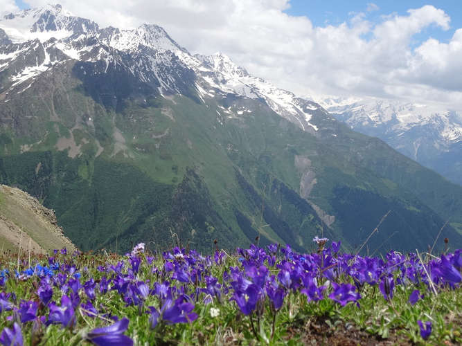 Géorgie-montagnes-iris-neige.jpg