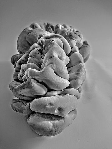 Luzia_Rux_Mushroom-like-a-brain_der_Vers