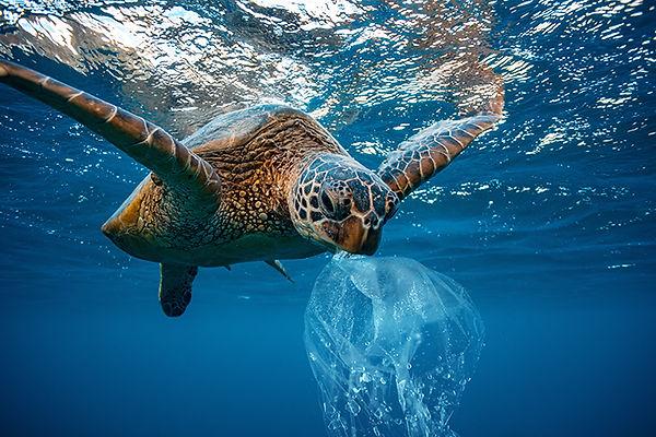 plastic in the sea.jpg