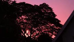 Sunset in Clarendon Feb 2019