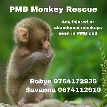 Monkey rescue.jpg
