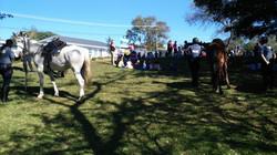 Horse Unit visit Sunnylea June 2019