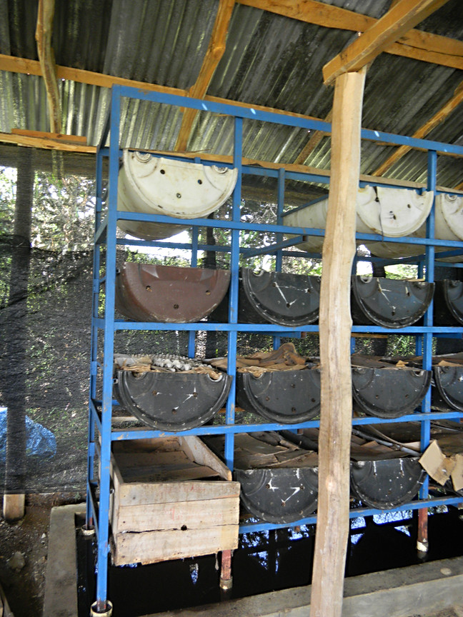 iF Worm compost production bins