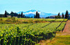 New Zealand's Emerging Wine Region