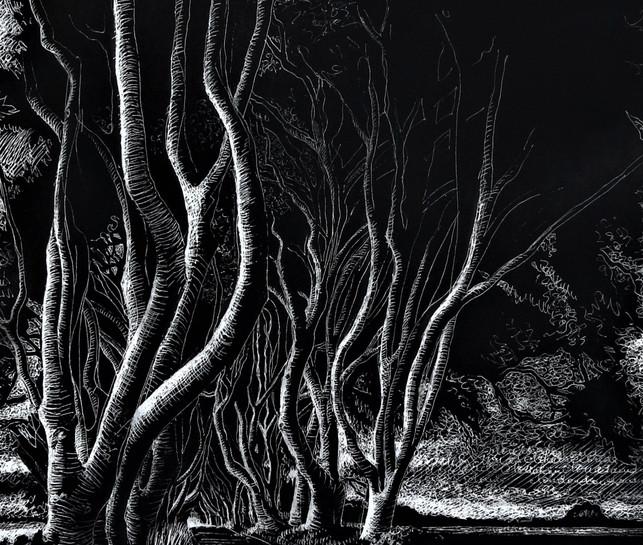 The Dark Hedges I Co. Antrim