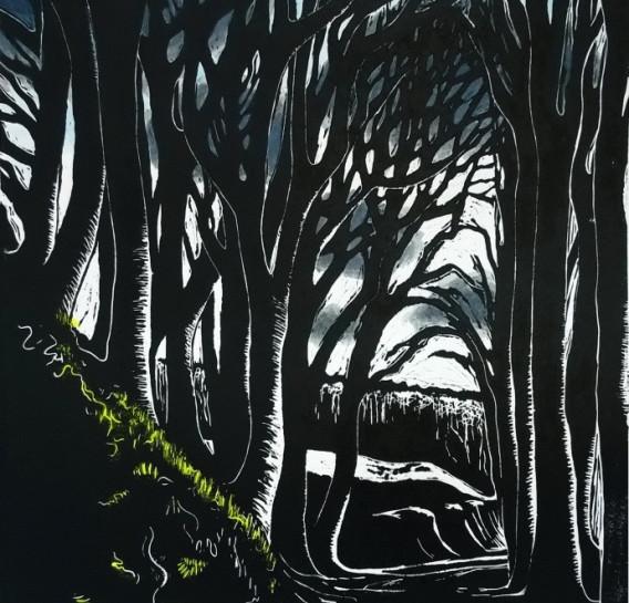 Beech trees in the evening, Dumfries