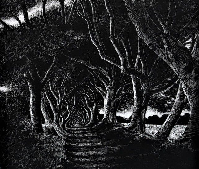 The Dark Hedges III, Co. Antrim