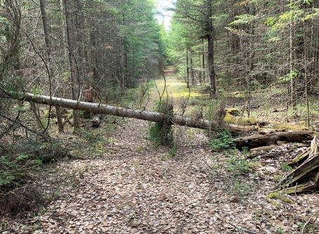 Annual Meeting and Trail Clearing Weekend