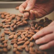 Qualitätskontrolle und Sortierung der Bohnen – als Vorbereitung für die Röstung...