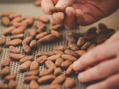 Wie 100% handgemachte Schokolade entsteht – Folge 2: Bohnenkontrolle und -Röstung