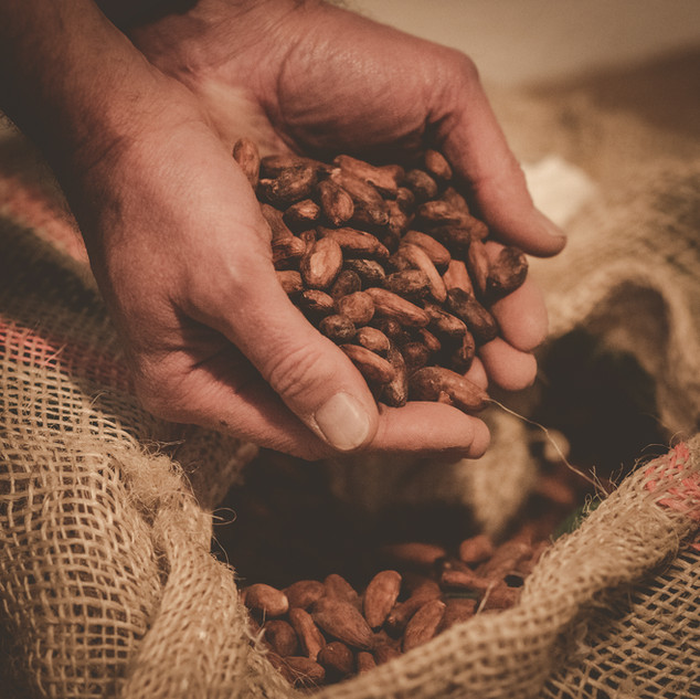 Wunderbare Kakaobohnen, die bald zu feiner La Schoggi verarbeitet werden...