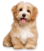MOBILE DOG GROOMER Chemung County, NY