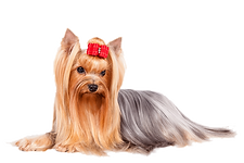 dog groomer in Chemung County, NY
