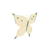 butterfly1_wh.png
