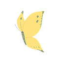 butterfly2_ye_edited.png