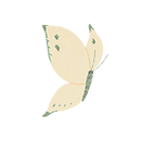 butterfly2_wh.png