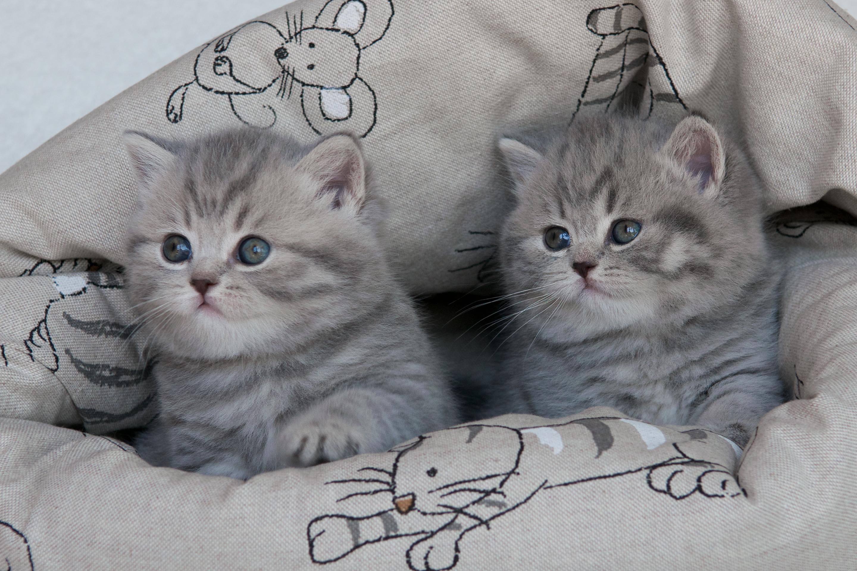 Nicolette & Nugget Bugaboo