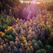 Rainbow Trees.jpg