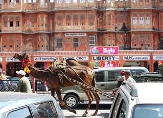 Car, camel, car, camel...