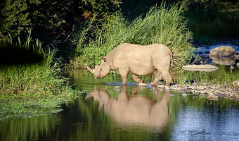Rhino south africa book anti-poaching