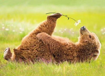 Le rêve de l'ours