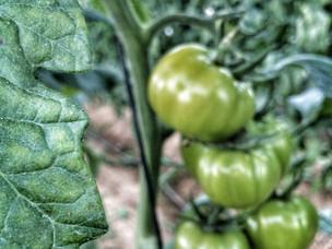 Tiendas de comida orgánica en el DF