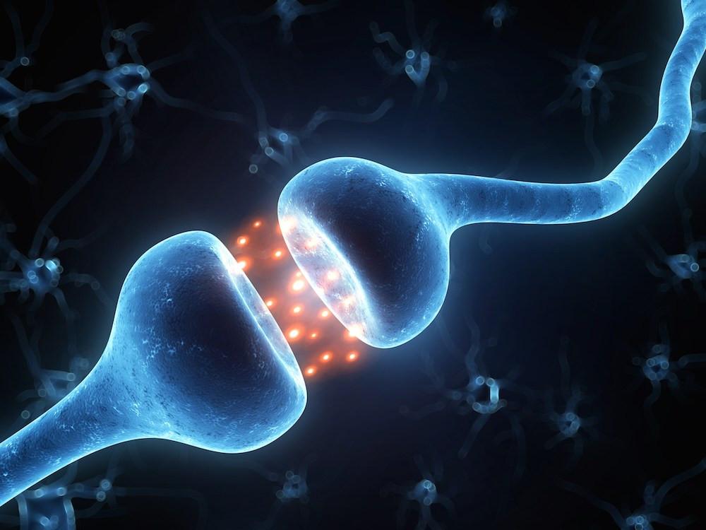 una sinapsis en acción