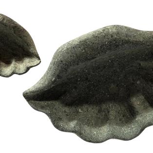Seashell Two Sizes