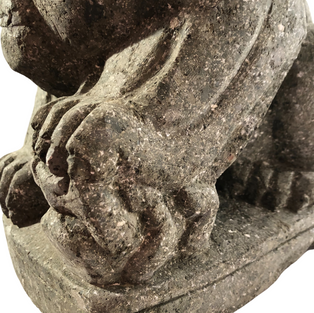 Paw Detail