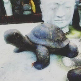 New Turtle