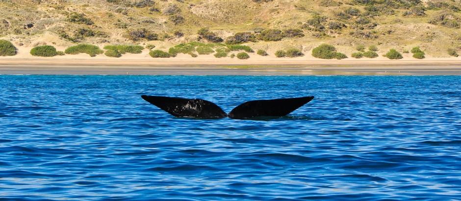 Puerto Madryn y Península Valdés: el paraíso de los animales marinos