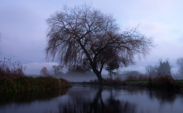 Tree on River Test