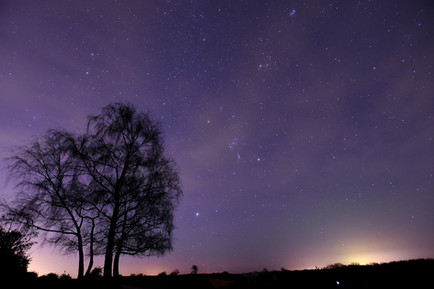 Orion over the New Forest