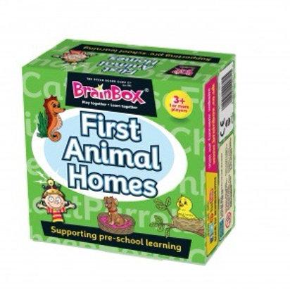 Brainbox - First Animal Homes