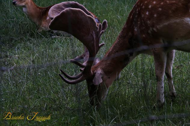 Tiere2-3.jpg