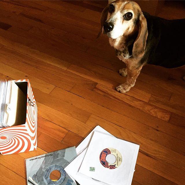 DJ#dottiemaebeagle