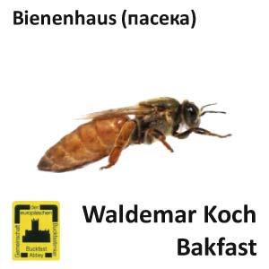 Пчеломатка Бакфаст, пользовательская из Германии