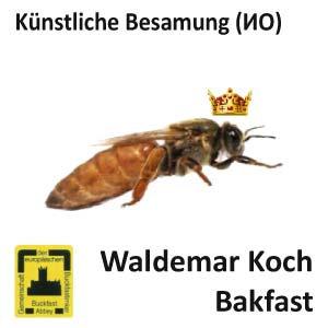 Пчеломатка Бакфаст ИО из Германии