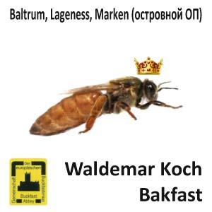 Пчеломатка Бакфаст, островного спаривания из Германии
