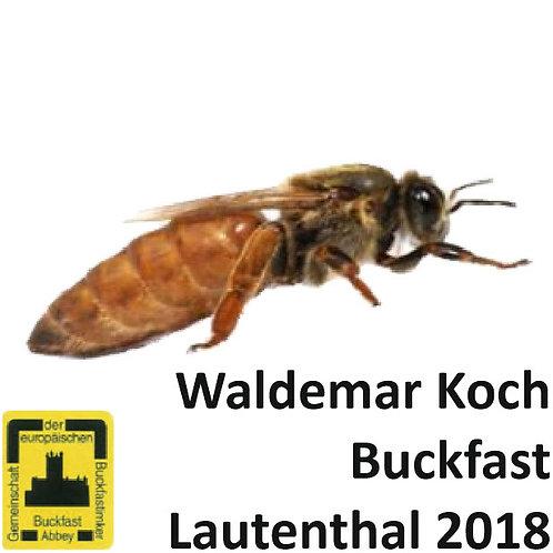 Пчеломатка Бакфаст, плодная (Лаутенталь) из Германии