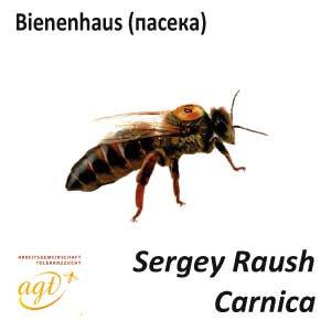 Пчеломатка Карника, пользовательская (Германия)