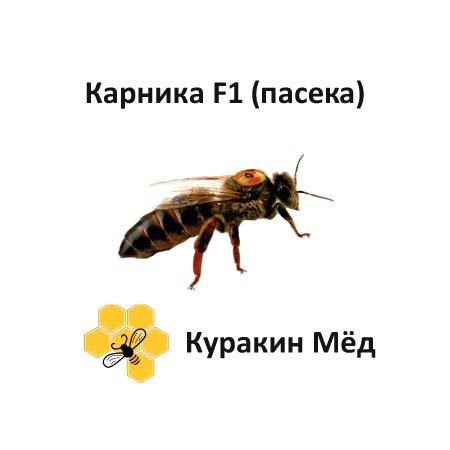 "Пчеломатка Карника, плодная, с пасеки ""Куракин Мёд"" F1"